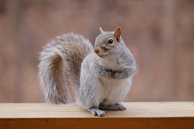 Texas Gulf Coast Squirrel Removal